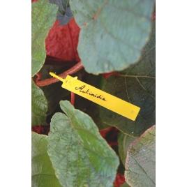 Etiquettes à suspendre avec feutre Tree label 40 pièces NORTENE