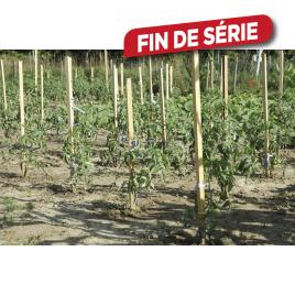 Tuteur tomate acacia 22 x 22 mm x H1,50 m