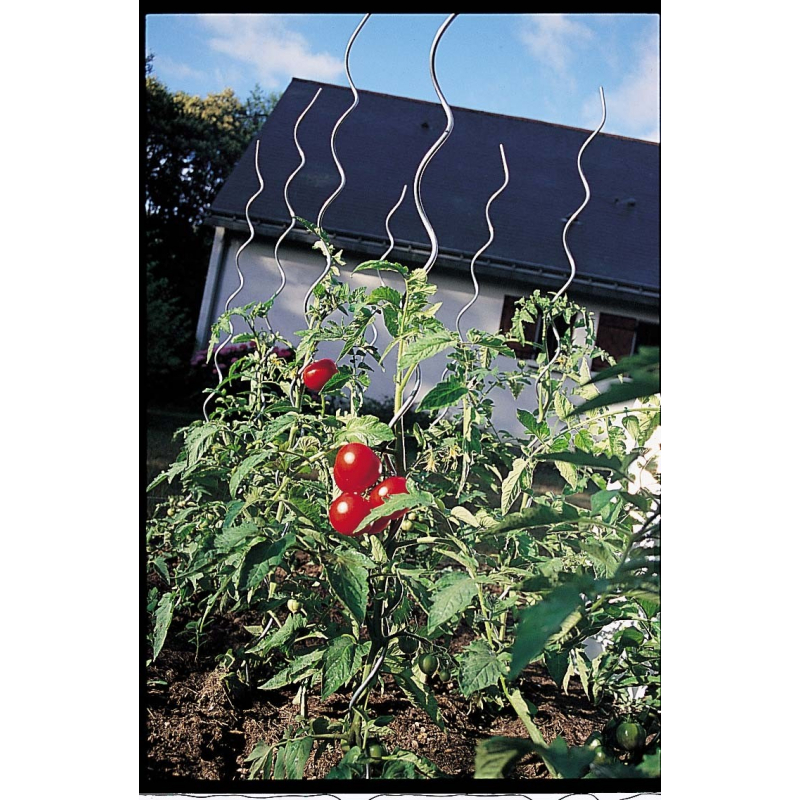 Tuteur tomates spirale h 1 80 m - Tuteur tomate spirale leclerc ...