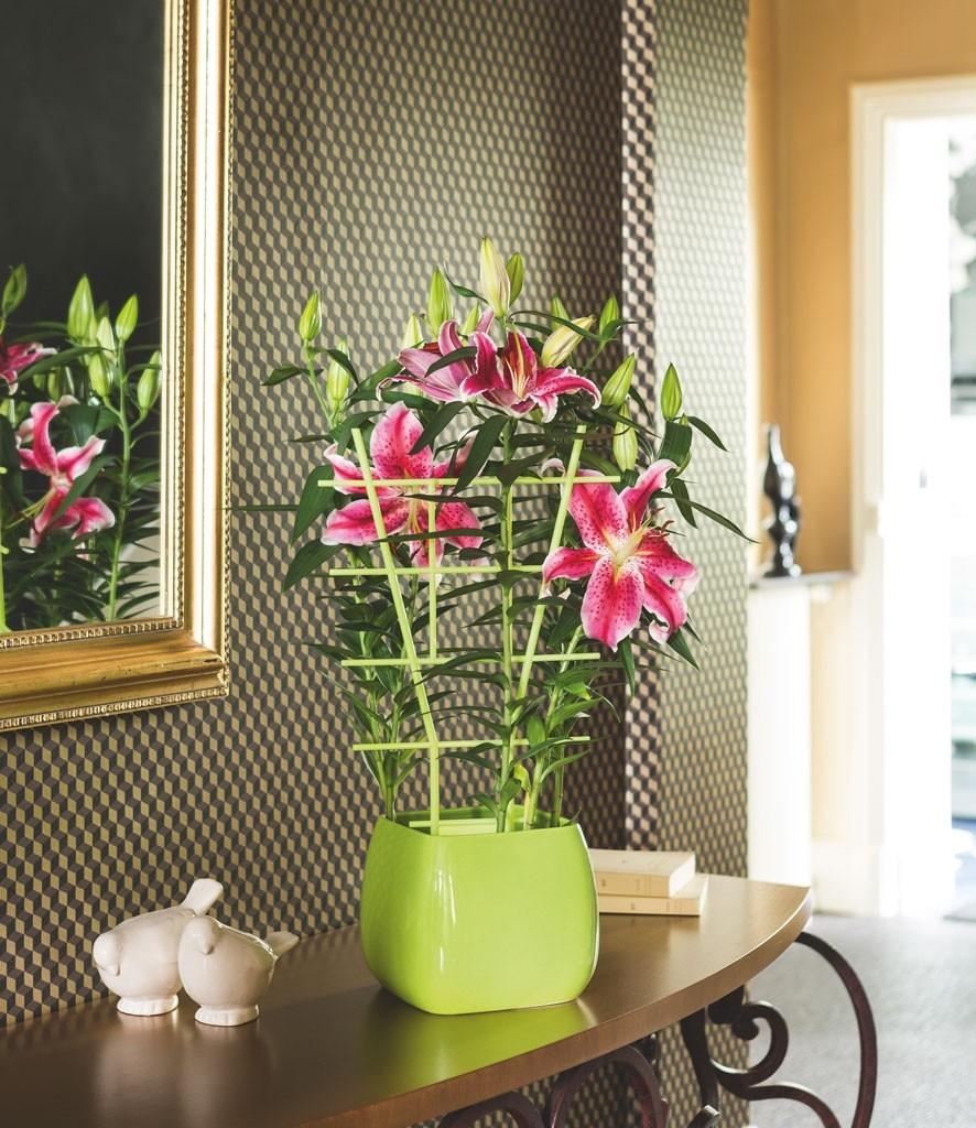Echelle plante good porte plante creer bois with echelle plante cheap nouveau etagre fleurs en - Mr bricolage moulins ...