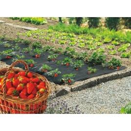Film de paillage spécial fraises 1,40 x 10 m 12 pièces NORTENE