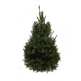 Sapin de Noël naturel en pot Omorika 80-100cm