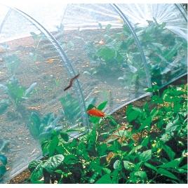 Filet anti-insectes Biocontrol NORTENE