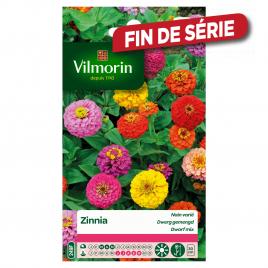 Semences de zinnia VILMORIN