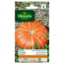Semences de potiron VILMORIN