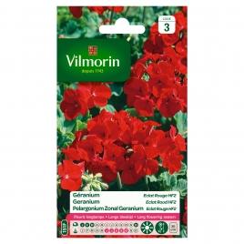 Semences de géranium Eclat Rouge HF2 VILMORIN
