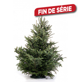 Sapin Abies Fraseri naturel coupé 150-175 cm