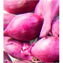 Bulbes d'échalottes Mikor 1 kg VILMORIN