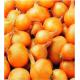 Bulbes d'échalottes Golden Gourmet 1 kg VILMORIN