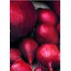Bulbes d'oignons Red Baron 0,5 kg VILMORIN