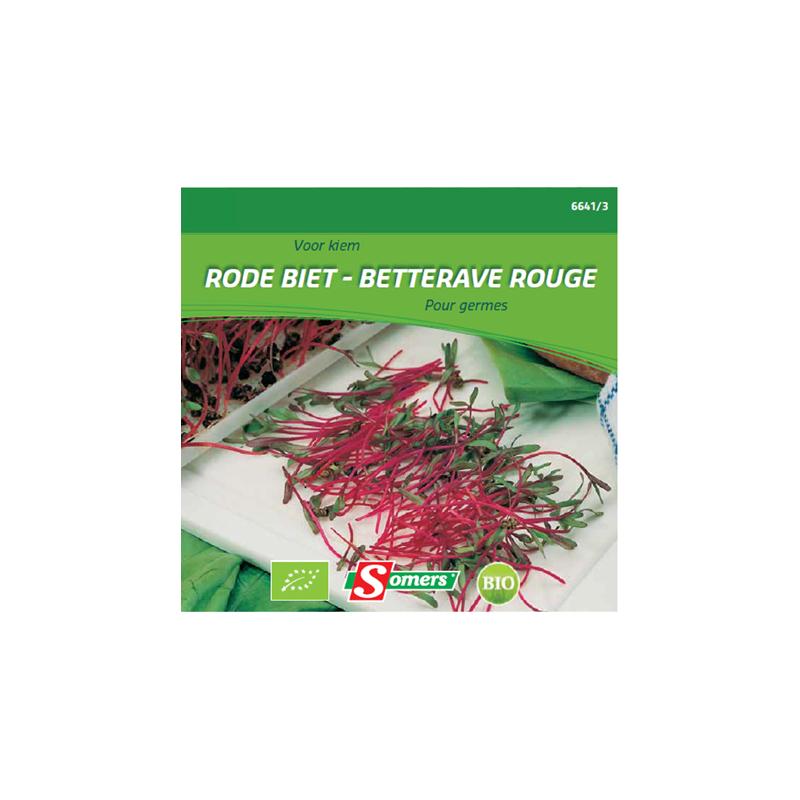 semences de germes de betterave rouge bio somers. Black Bedroom Furniture Sets. Home Design Ideas