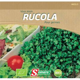 Semences de germes Rucola Bio SOMERS
