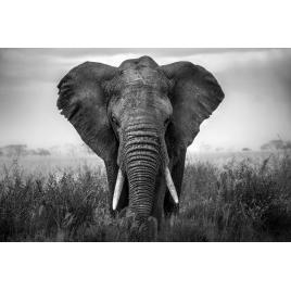 Toile Eléphant 97 x 65 cm