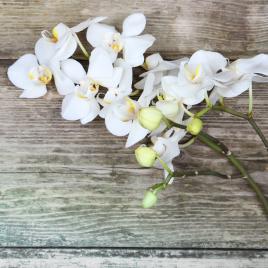 Toile Orchidée 30 x 30 cm