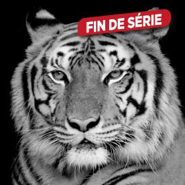 Impression sur verre Tigre Blanc 30 x 30 cm