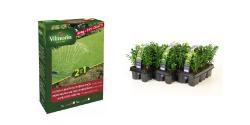 Semence, bulbe, plante