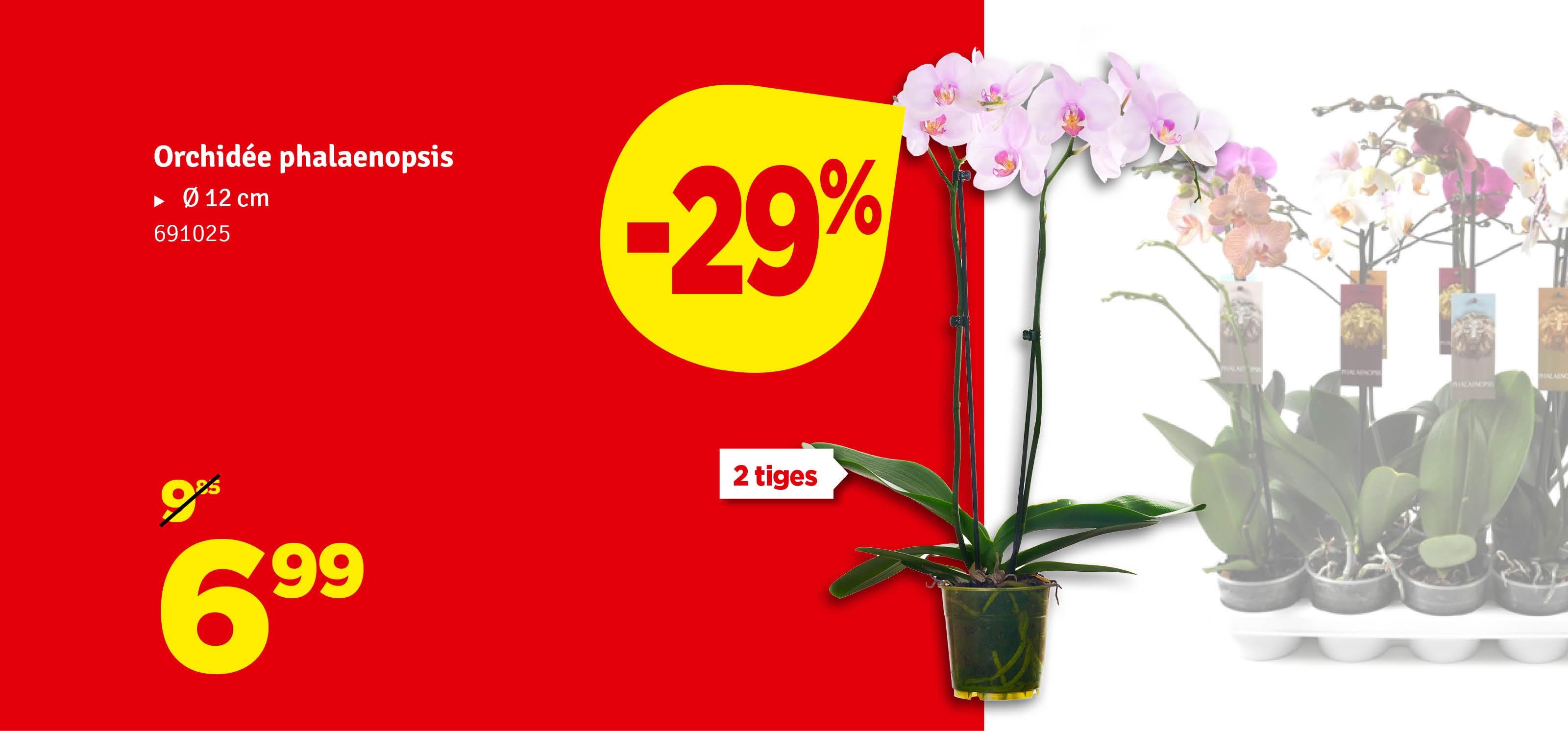 Promo - Orchidée
