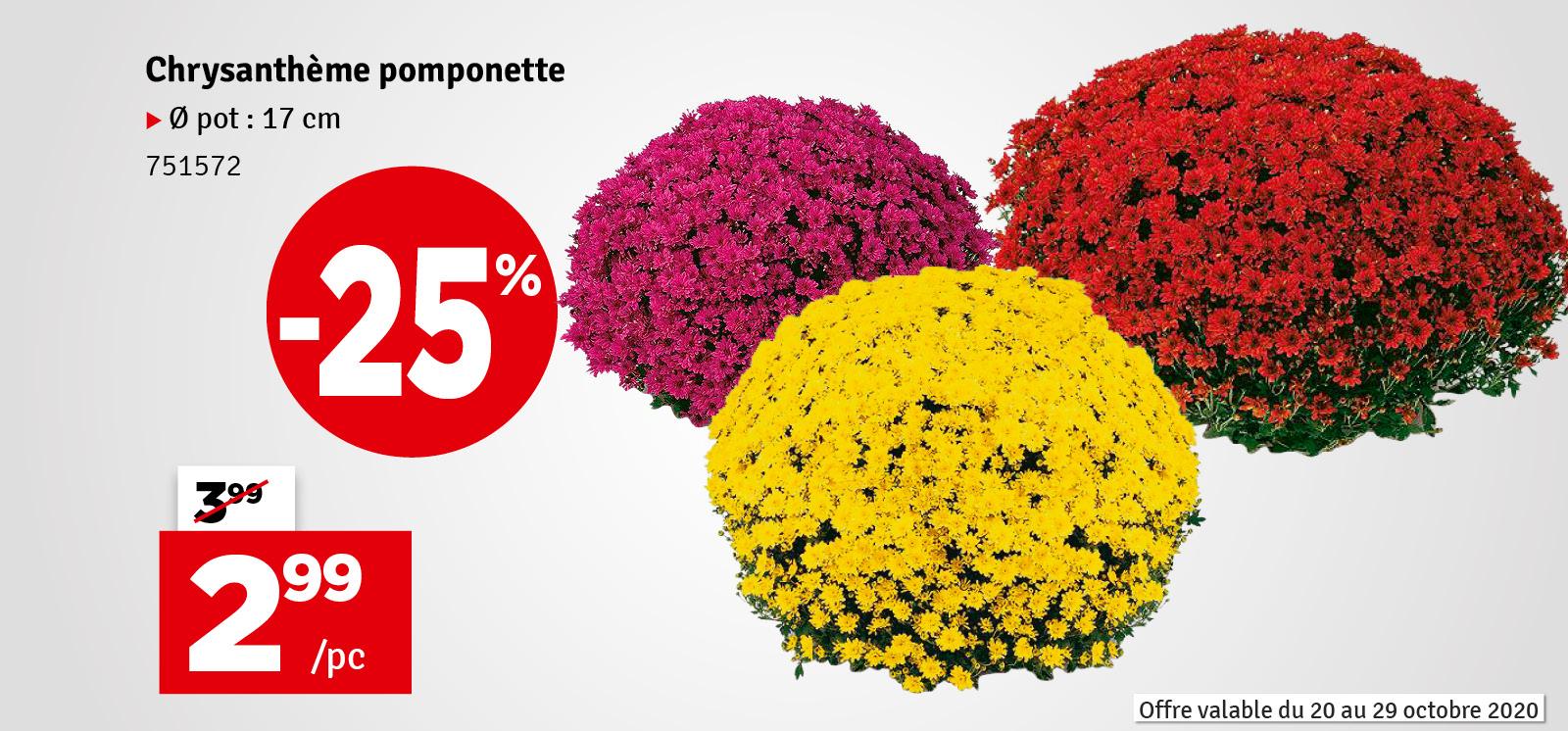 Promo - Chrysanthème pomponette en pot