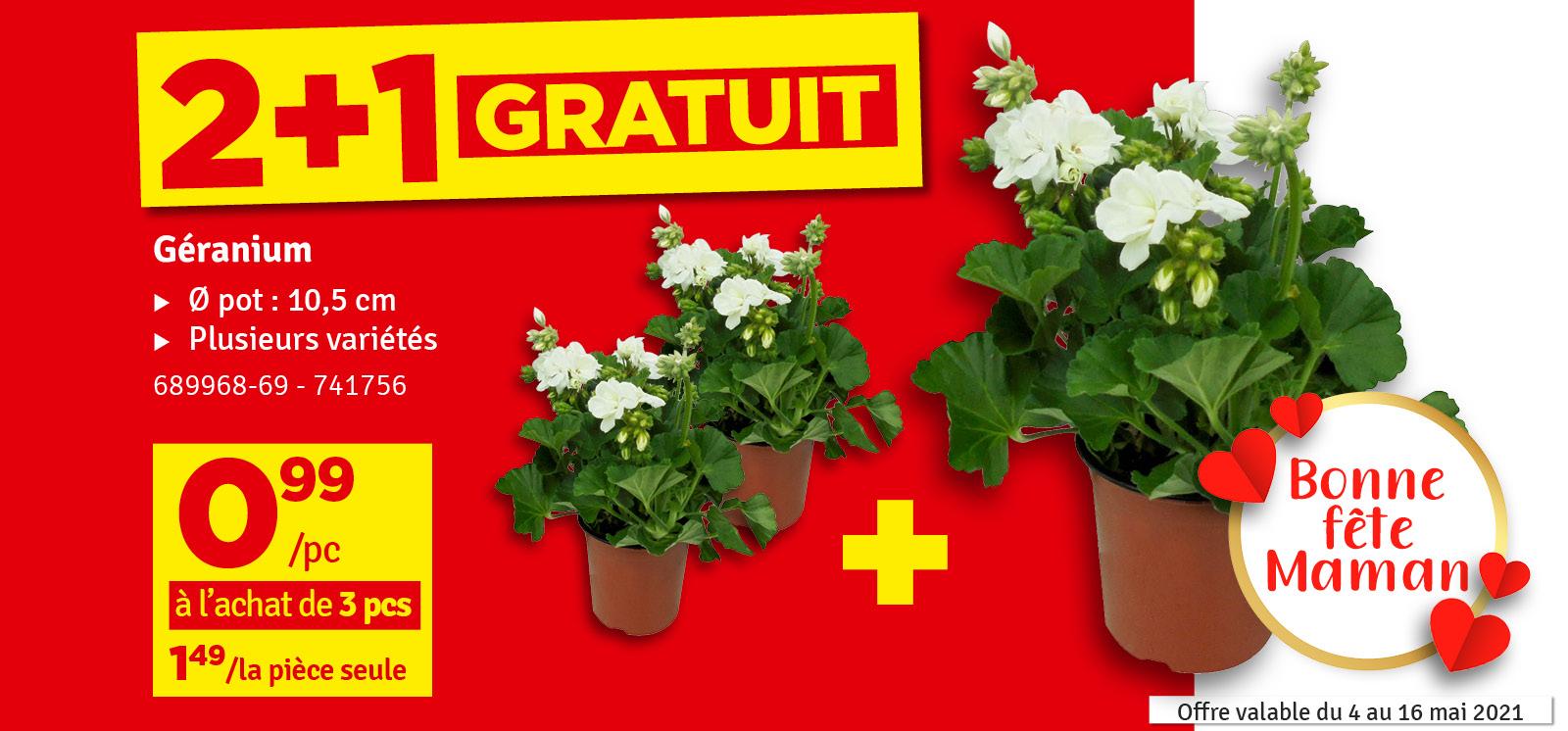 Promo - 2+1 gratuit Géraniums